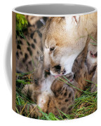 Couger Mom Cleans Kitten Coffee Mug