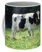 Cow In Pasture Coffee Mug