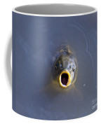 Curious Carp Coffee Mug