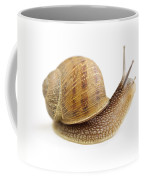 Curious Snail Coffee Mug