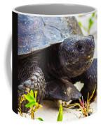 Curious Turtle Coffee Mug