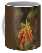 Cushion Spurge Coffee Mug