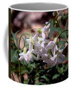 Cutleaf Toothwort Dspf048 Coffee Mug