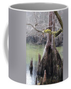 Cypress Stump #1 Coffee Mug