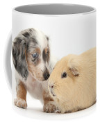 Dachshund Pup Yellow Guinea Pig Coffee Mug
