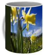 Daffodils In Cezallier. Auvergne. France. Europe Coffee Mug