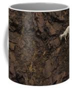 Dall Sheep Were Is Very Adapt Coffee Mug