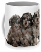 Daxiedoodle Poodle X Dachshund Puppies Coffee Mug by Mark Taylor