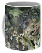 Decorator Crab, Indonesia Coffee Mug