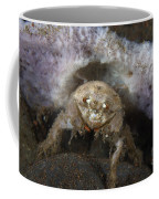 Decorator Crab With Mauve Sponge Coffee Mug