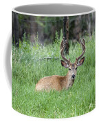 Deer At Rest Coffee Mug