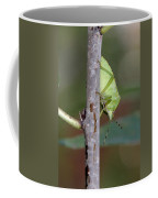 Descent Of A Green Stink Bug Coffee Mug