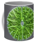 Desmid, Dic Coffee Mug
