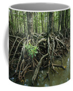 Detail Of Mangrove Roots At The Waters Coffee Mug by Tim Laman