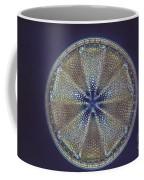 Diatom - Actinoptychus Heliopelta Coffee Mug