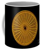 Diatom Alga, Arachnoidiscus Coffee Mug