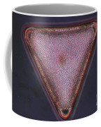 Diatom - Triceratium Formosum Coffee Mug