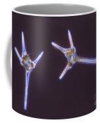 Dinoflagelate Coffee Mug