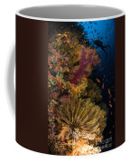 Diver Swims By Soft Corals And Crinoid Coffee Mug