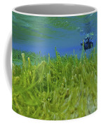 Diver With Fluorescent Green Algae Coffee Mug