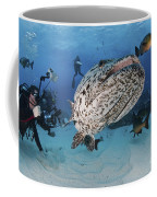 Divers Photographing A Giant Grouper Coffee Mug