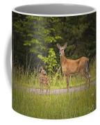 Doe And Fawn Along A Roadside Near Iron Mountain Michigan. Coffee Mug
