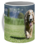 Dog Walking On The Green Grass Coffee Mug