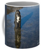 Dog With Reflections And Shadow Coffee Mug