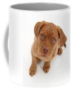 Dogue De Bordeaux Puppy Coffee Mug