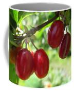Dogwood Cornus Mas Berries Coffee Mug