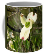 Dogwood Blossome Coffee Mug