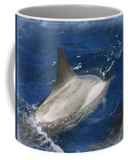 Dolphin Escort Coffee Mug