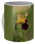 Down Home Two-tone Iris Coffee Mug