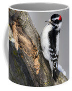 Downy Woodpecker Perched In A Tree Coffee Mug