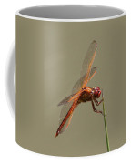 Dragonfly - Dodger Coffee Mug