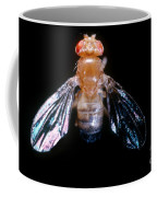 Drosophila With Dichaete Wings Coffee Mug