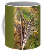 Dry Queen Anns Lace I Coffee Mug