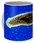 Dugesia, A Flatworm Coffee Mug