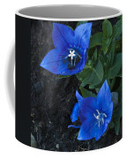 Dwarf Balloon Flower Platycodon Astra Blue  Coffee Mug by Steve Purnell