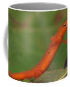 Easterm Newt Nnotophthalmus Viridescens 21 Coffee Mug