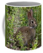 Eastern Cottontail Rabbit Dmam005 Coffee Mug