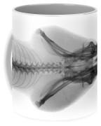 Eastern Diamondback Rattlesnake Head Coffee Mug