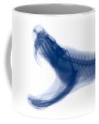 Eastern Diamondback Rattlesnake, X-ray Coffee Mug