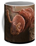 Eastern Subterranean Termite, Sem Coffee Mug by Ted Kinsman