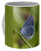 Eastern Tailed-blue Butterfly Din045 Coffee Mug