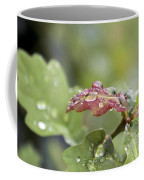 Eau De Vie - S01r03 Coffee Mug by Variance Collections