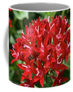 Egyptian Star Cluster Coffee Mug