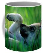 Eight-week-old Captive Gray Wolf, Canis Coffee Mug