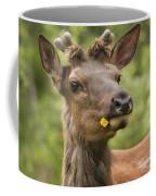 Elk Cervus Canadensis With Dandelion In Coffee Mug