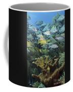 Elkhorn Coral With Schooling Grunts Coffee Mug